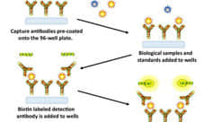 Detection of binding partners for 100 cate glycans in sample types